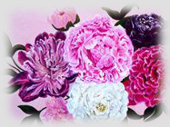 feng sui painting peony for love and mariage